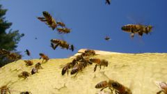 Как начать пчеловодство