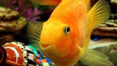 Как держать рыб в аквариуме