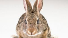 Как отличить мех кролика