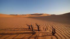 Как найти в пустыне воду