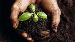 Как вылечить почву