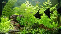Как вырастить водоросли