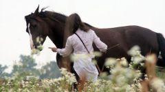Как обращаться  с лошадью