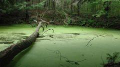 Как не утонуть в болоте