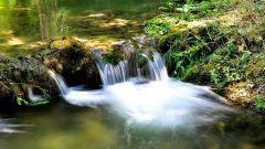 Как в лесу найти воду