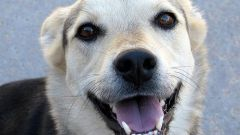 Как отучить щенка от рук