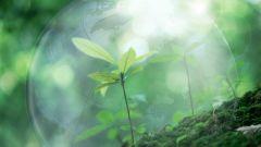 Защита экологии: как спасти природу