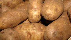 Как вырастить хороший урожай картошки