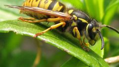 How to protect skin from insects in nature
