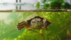 Как обустроить террариум  для черепахи