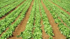 Почему нужно укрывать посевы