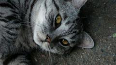 Как пережить смерть любимого кота