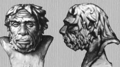 Когда появились первые люди