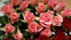Как посмотреть выставку роз в Грассе