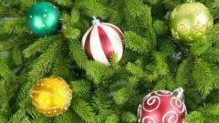Как выбирать елки на Новый год