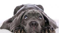 Как лечить болезни глаз у животных