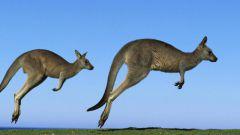 Как улететь в Австралию