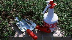 Как защитить посевы во время жары