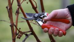 How to prune bushes