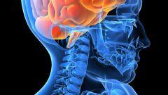 Как активизировать работу мозга