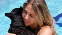 Какой подарок сделать женщине - любительнице животных