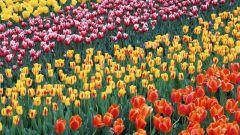Как прошел фестиваль цветов в Челси