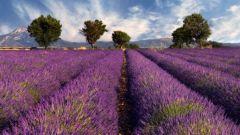 Как устроить каникулы в Провансе