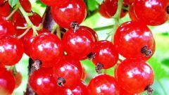 Как испечь летний пирог с красной смородиной и безе