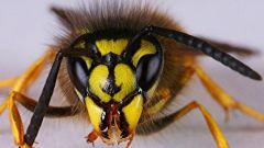How to treat wasp sting
