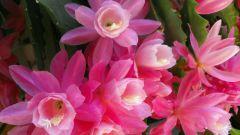 Что такое декоративное растение