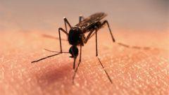 Как подобрать средство от укусов насекомых
