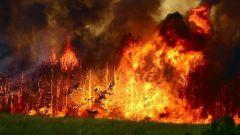 Почему происходят лесные пожары