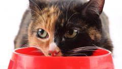 Как пристроить кота на время отпуска