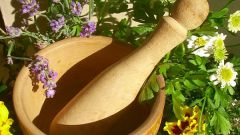 What healing herbs to plant on the plot