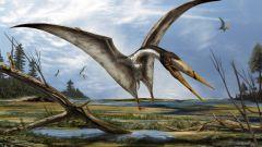 Что было бы, если бы птерозавры выжили?