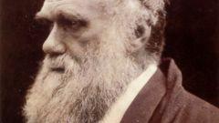 Что включает в себя теория Дарвина
