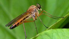 Как защититься от комаров ночью