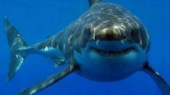 Как защищают пляжи от акул