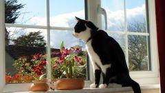 Что делают коты, когда они одни