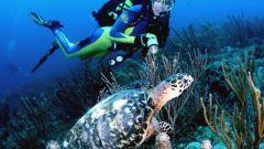 Что нужно для подводного плавания