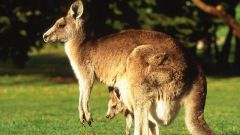 Какие бывают животные в Австралии