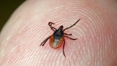 How to identify tick-borne encephalitis