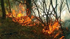 Как посмотреть карту пожаров в России