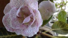 Как поливать цветущие растения летом
