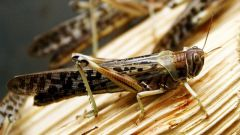 How to cope with a plague of locusts
