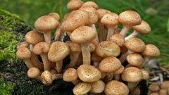 Как определить, съедобный ли гриб