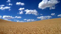 Как уберечь урожай хлеба от пожара