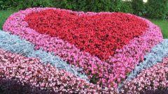 Как сделать рабатку в саду