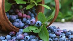 How to pick blueberries
