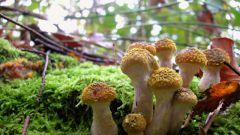 Как найти в лесу грибные и ягодные места
